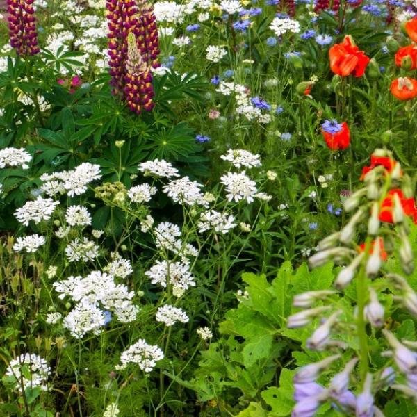 Summer Planting